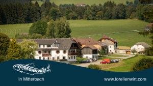 Sommerurlaub Oberösterreich - Bauernhof - Forellenwirt in Mitterbach